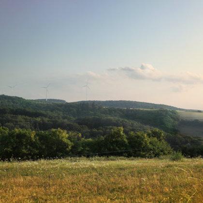 Sommergrün trotz Dürre im August 2019 | Verlängerung Honiggasse