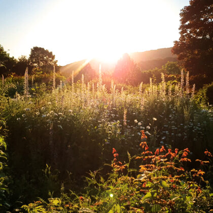 2021.06.14 | Blumenwiese auf dem Friedhof in der Sonne | Foto: T. Harth