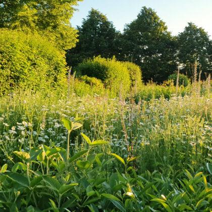 14.06.2021 |Blumenwiesengrün auf dem Friedhof | Foto: T. Harth